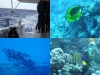0610_hurghada-collage2